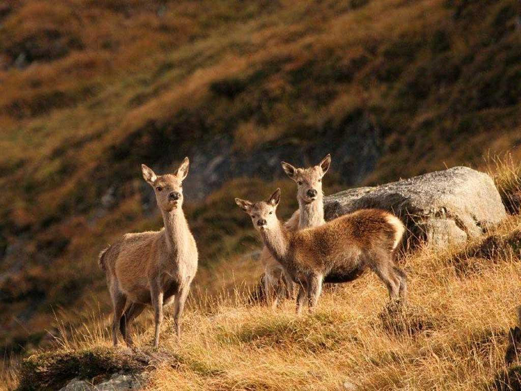 Outer hebrides wildlife